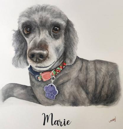 cachorro aquarela